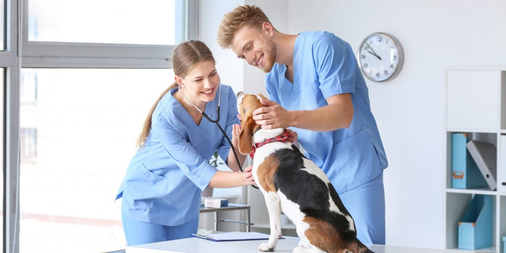 Two vet assistants with a dog